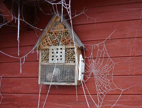 spider webs winter frozen cobwebs