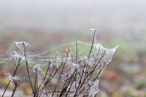 spider webs fog morgentau