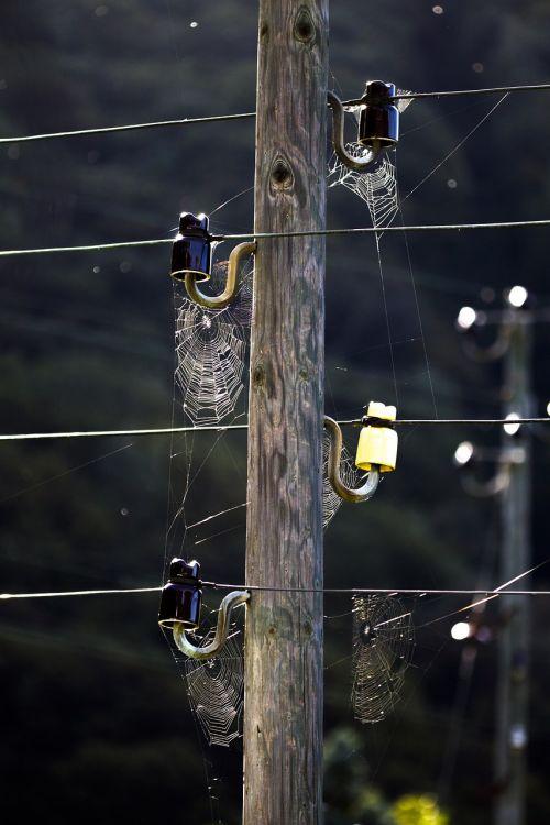 spider webs cobweb network