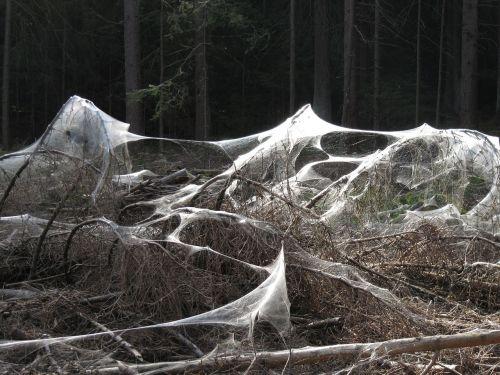 spider webs weird forest