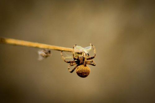 spiders arachnid arachnophobia