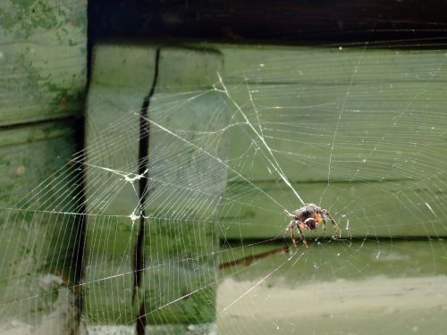 spiderweb spider web