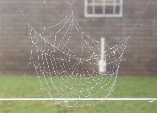 spiderweb dew web