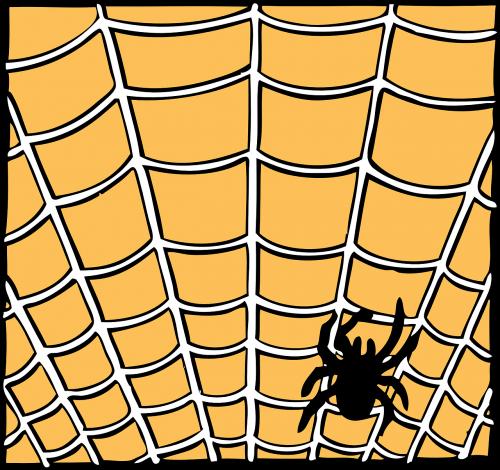 spiderweb spider orange