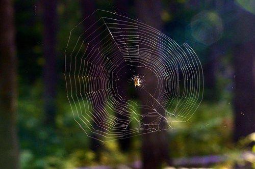 spiderweb  spider  web