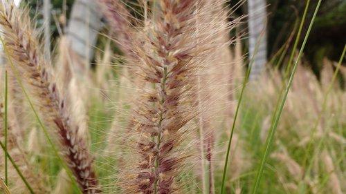 spikes  garden