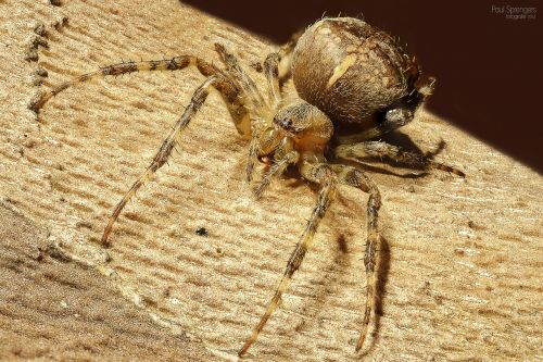 spin arthropods spiders