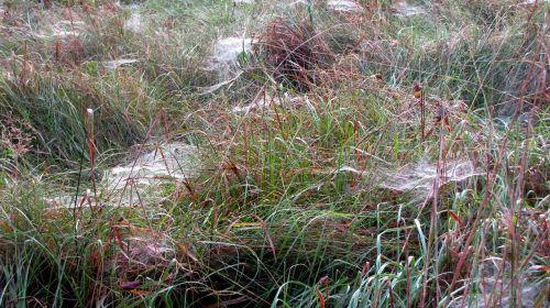 spin spider webs autumn