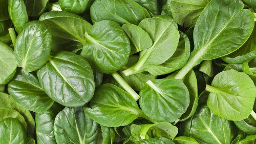 spinach organic healthy
