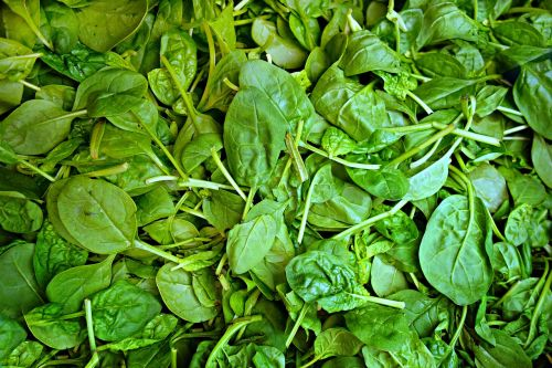 spinach vegetable fresh vegetable