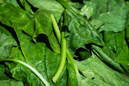 spinach  leaf spinach  vegetables