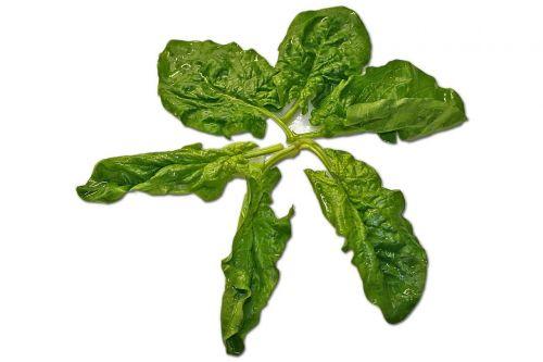spinach leaf spinach salad