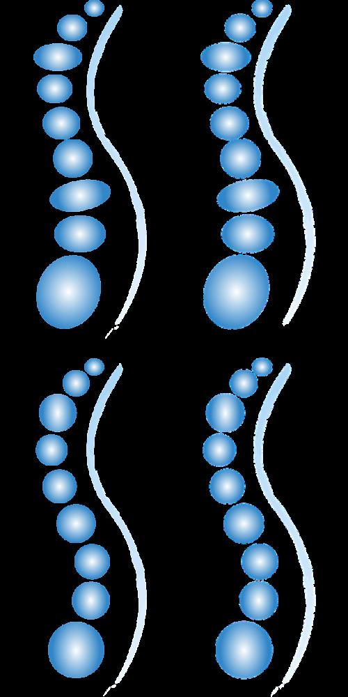 spine different variants ellipses