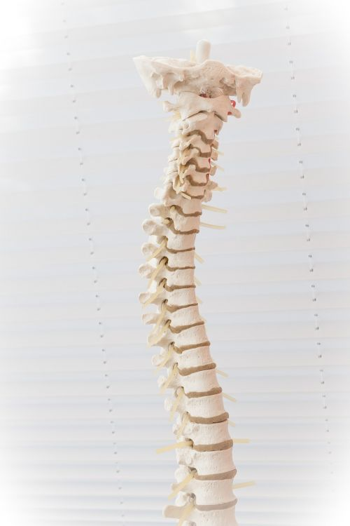 spine disc move