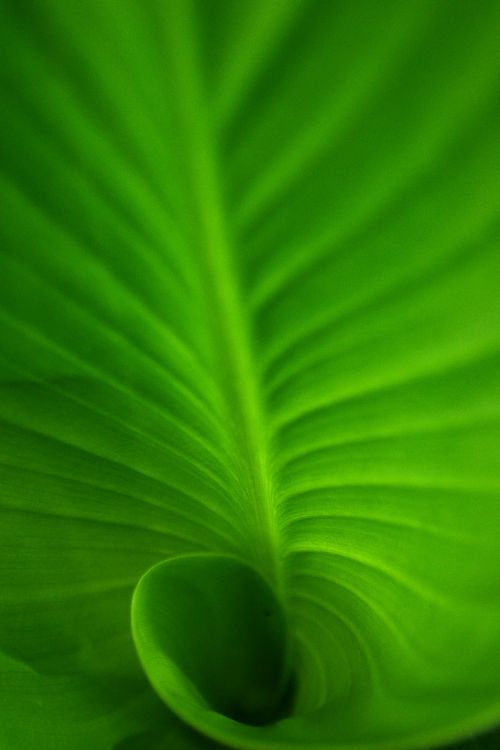 spiral spiral leaf green