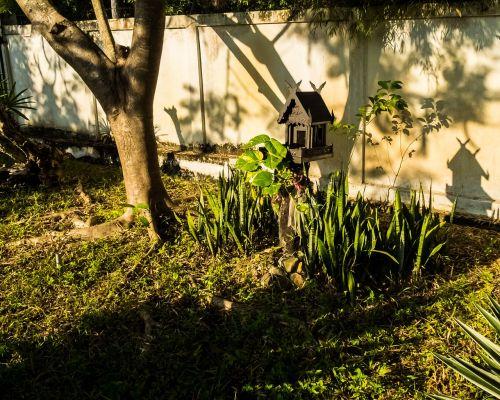 spirit house morning sun tree