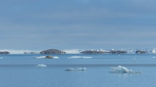 spitsbergen norwegian sea ice