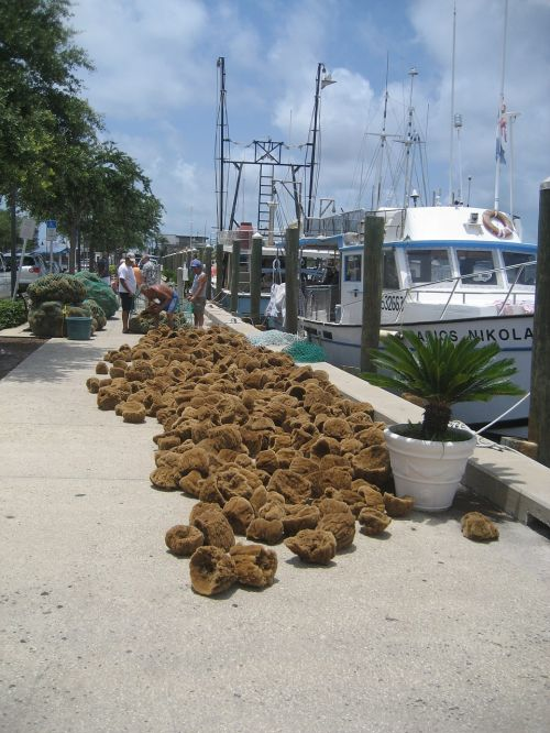 sponges florida sponge