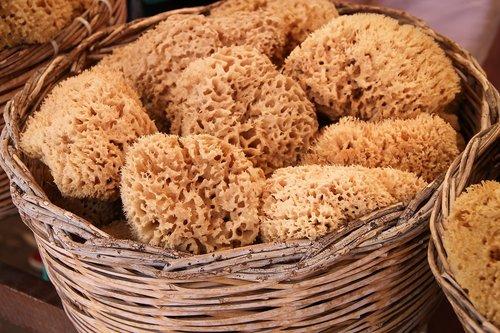 sponges  natural sponges  sea sponge