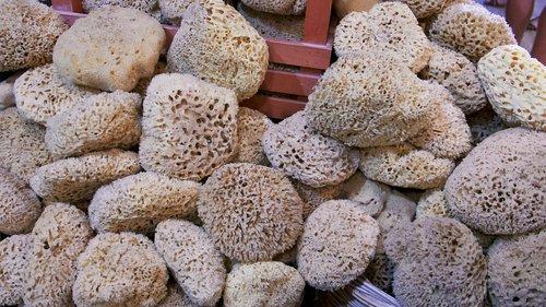 sponges  ocean  sea