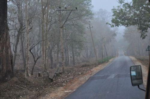 spooky mystic mist