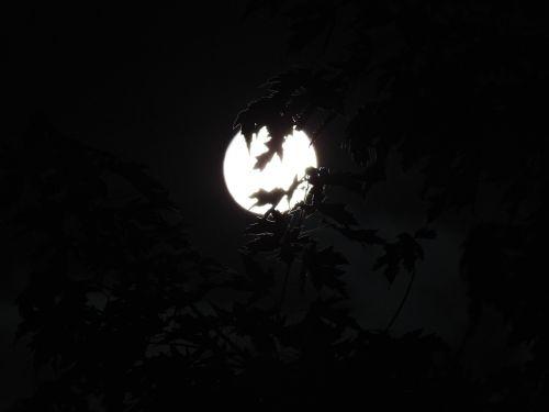 spooky moonlight through trees halloween
