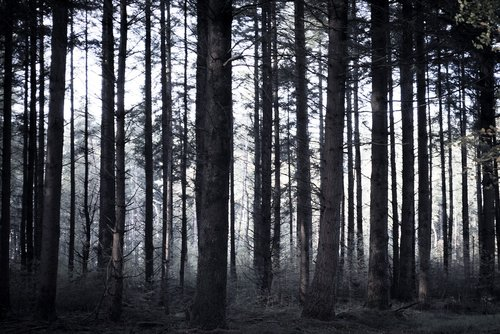 spooky  forest  trees