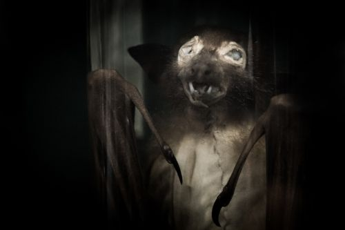 Spooky Bat