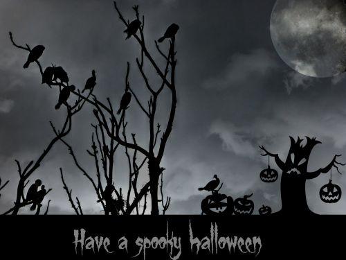 Halloween, paukštis, paukščiai, juodieji paukščiai, apsėstas, jack-o-žibintai, pilnas & nbsp, mėnulis, Halloween & nbsp, naktį, baisu, baugus, moliūgai, siluetai, baisu Halloween