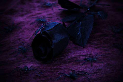 Spooky Rose