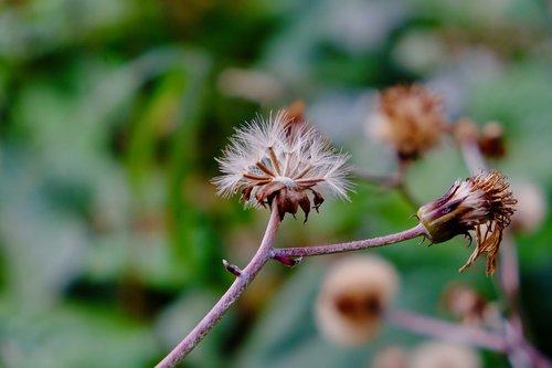 spore grass  cotton  dead