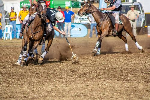 sport polo cross horse