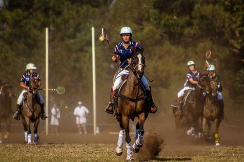 sport horse polo cross