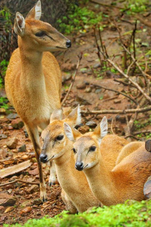 spotted deer wildlife jungal