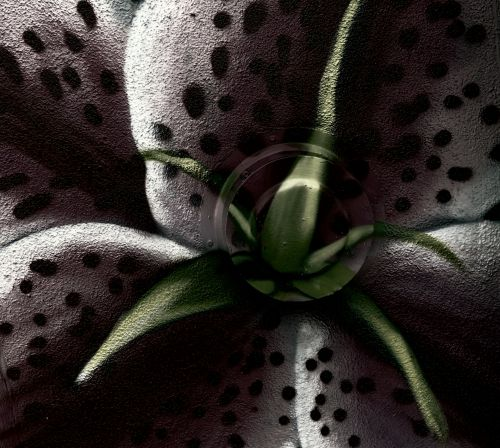 Spotted Flower Background Painting