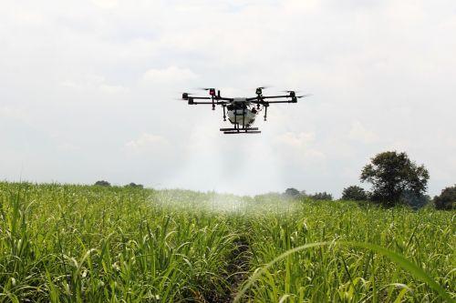 spraying sugar cane sugar cane drone farm