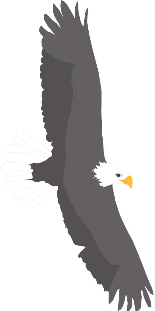 spread eagle bird