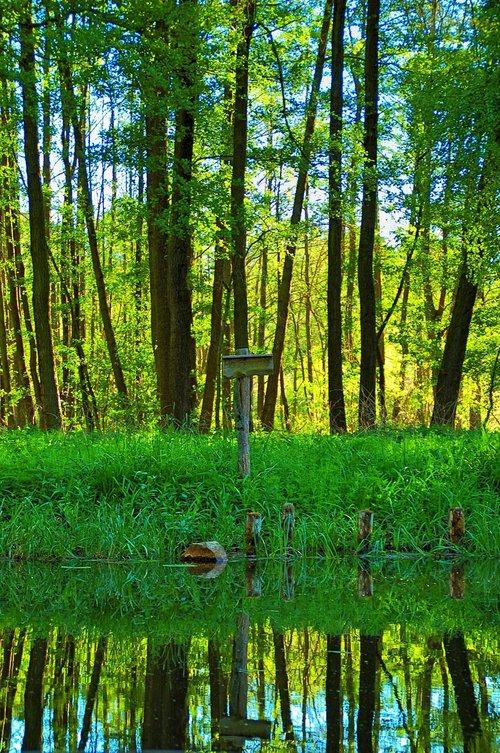 spreewald  trees  water