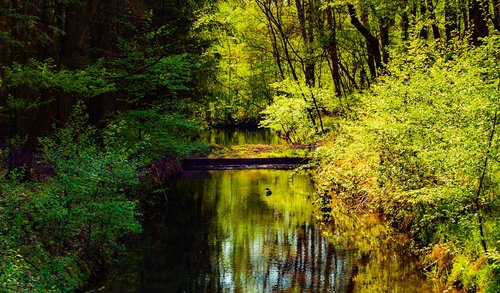 spreewald  nature  forest