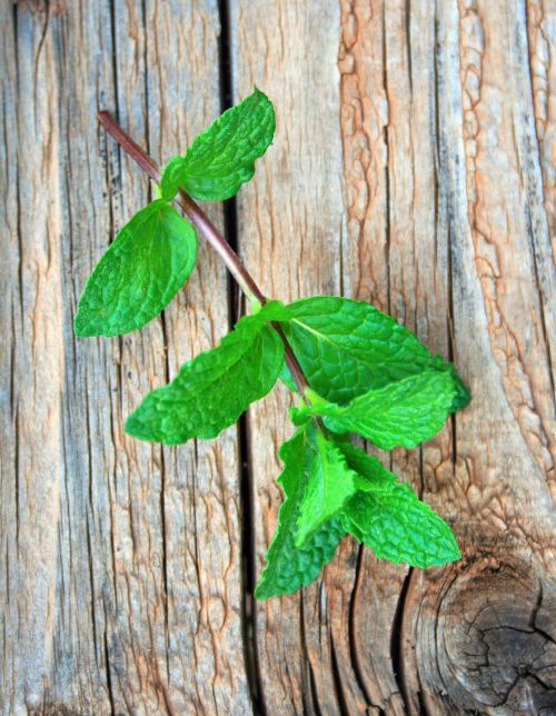 Sprig Of Mint