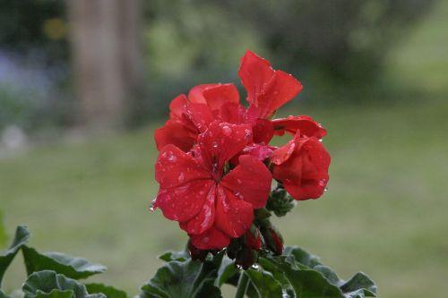 spring public record flora