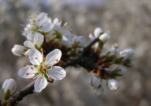 spring flowers white