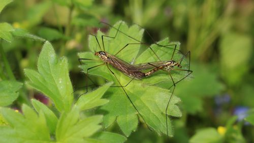 spring coupling mosquitoes