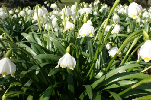spring bledulky vernal