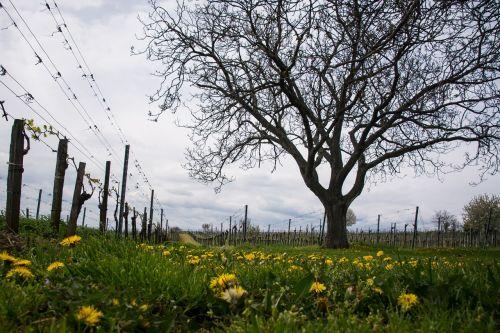 spring vineyard garden