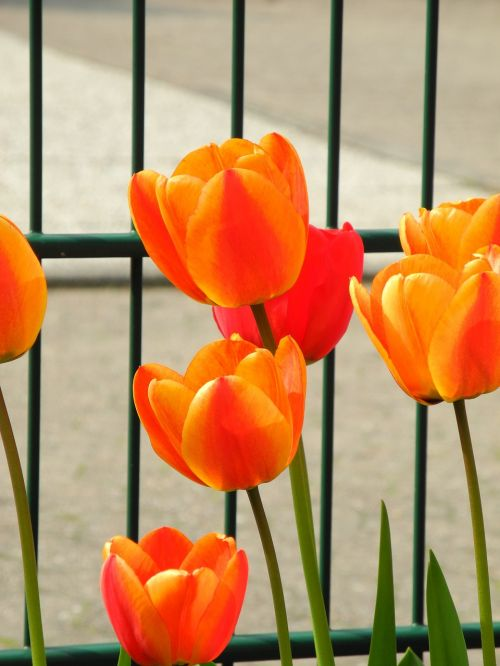 spring garden fence springtime