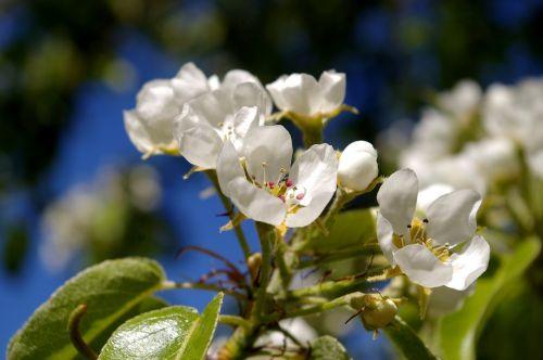 spring petals tree
