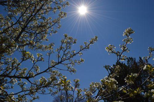 spring sky sun