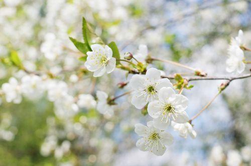 spring tree sunny