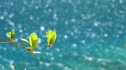 spring jiuzhaigou sea